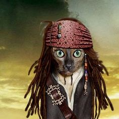 Cat Sparrow...✪funny, but how do they get their cats to sit still, my cat won't even let me put a collar on her.