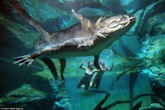 Crocosaurus Cove theme park is offering visitors the opportunity to go face-to-face with a...