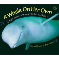 A Whale on Her Own: The True Story of Wilma the Beluga Whale - Guysborough's adopted beluga