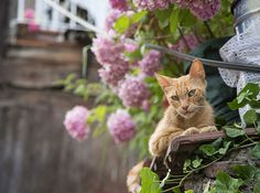 Cat Photo Stray Cat Istanbul Cat instant download by SOISTANBUL