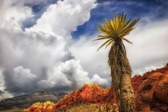 Red Rock Canyon - Vintage View of a Yucca, Sky and Rocks