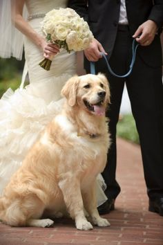 Ohhh, I love her dress.....plus how awesome....having a dog you raised together be part of the ceremony.