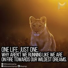 We Run, One Life, Panther, All Quotes, Movie Posters, Movies, Animals, Animales, Films