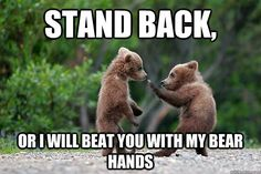 Other Bear: I'm shaking in my bear boots!  #martialarts #lifestyle…