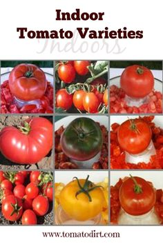 tomato varieties: which tomatoes grow best indoors? Indoor tomato varieties: how to choose heirlooms and hybrid tomatoes to grow indoors with Tomato DirtIndoor tomato varieties: how to choose heirlooms and hybrid tomatoes to grow indoors with Tomato Dirt Indoor Vegetable Gardening, Vegetable Garden Planning, Home Vegetable Garden, Tomato Garden, Small Space Gardening, Organic Gardening, Gardening Tips, Texas Gardening, Fruit Garden