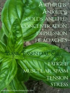 Basil essential oil. More information, contact, or purchases at www.EssentialOilsEnhanceHealth.com
