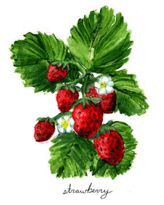 Strawberry Print Food Art Food Illustration by Interpersonal