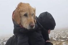 Hero couple who rescued freezing dog from mountain now face Covid breach fines - Mirror Online Old Golden Retriever, Frozen Dog, Dog Stories, Family Dogs, Dog Lovers, Mountain, Hero, Mirror, Couples