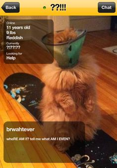 The cat who has no idea what's going on. | The 16 Cats You Meet OnGrindr