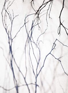 branches//