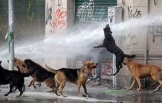 Un manifestante estudiantil se cubre de un chorro de agua lanzado por los antidisturbios, mientras un perro salta durante una manifestación para exigir cambios en el sistema educativo en Santiago de Chile.