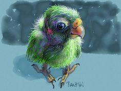 """Baby Parrot"" - Weds. Jan 23-2013  DAVID RANKIN DAILY BIRD SKETCHES & STUDIES"