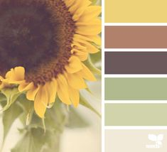Design Seeds + Color Atlas by Archroma® Design Seeds, Nature Color Palette, Colour Pallette, Color Combos, Coordination Des Couleurs, Brown Color Schemes, Bathroom Color Schemes Brown, Kitchen Color Schemes, Kitchen Colors
