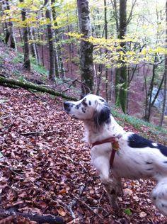 Bruno en el monte
