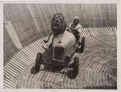 Des lions sur le mur de la mort lion moto voiture mur mort 05 photo histoire bonus
