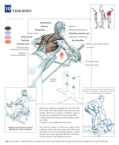 how to build pull up strength shoulder blades
