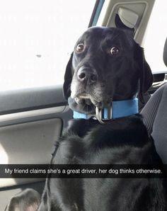 Dogs always know.