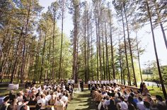wedding on a pasture - Google Search