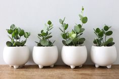 ayanas | Rakuten Global Market: Succulents and green drum (three foot Pot)