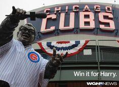 World Series 2016, Chicago Cubs World Series, Cubs Win, Go Cubs Go, Cubs Baseball, Baseball Season, National League, Cubbies, Bears