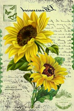 Decoupage Vintage, Vintage Crafts, Sunflower Tree, Flower Art Drawing, Sunflowers And Daisies, Vintage Seed Packets, Calligraphy Drawing, Sunflower Pictures, Flower Images