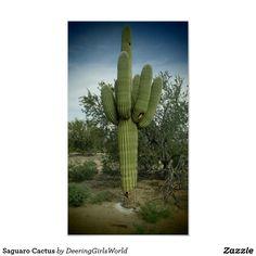 Saguaro Cactus Poster