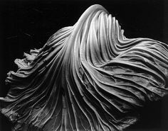 Cabbage Leaf, Edward Weston (I was just talking about this shot...)