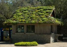 Wish I'd known about green roofs before we re-roofed my husband's office--it would have been perfect.