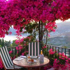 Scenic Patio with Bougainvillea trees Outdoor Spaces, Outdoor Chairs, Outdoor Living, Outdoor Decor, Beautiful Gardens, Beautiful Flowers, Wonderful Places, Beautiful Places, Landscape Design