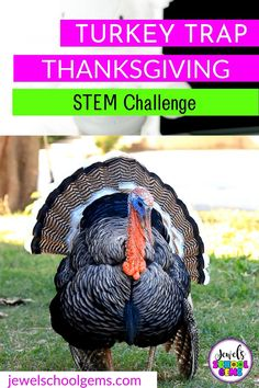 3 AWESOME THANKSGIVING STEM CHALLENGES TO TRY RIGHT NOW by Jewel's School Gems | Looking for fun and easy Thanksgiving STEM activities for kids in the elementary classroom? Challenge your students to design and build a turkey trap using popsicle sticks, skewers, and yarn/string. Challenge them to make sure it works and can capture a tom turkey. Click NOW to read about this STEM project idea. #jewelschoolgems