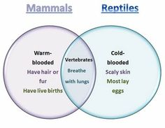 Ven diagram mammals fish life science animal kingdom learning ideas grades k 8 mammals and reptiles venn diagram ccuart Image collections