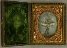 Green Fairy Specimen