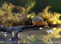 Ukrainian photographer Vyacheslav Mishchenko documents tiny creatures in nature who often go unseen. In particular, he captures portraits of snails that are both magical and adorable. Macro Photography Tips, Animal Photography, Amazing Photography, Nature Photography, Micro Photography, Digital Foto, Magical Pictures, Surreal Photos, Epic Photos