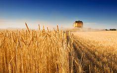 Jornadas técnicas por calidad de trigo declaradas de interés por la Facultad de Agronomía
