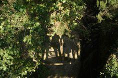 In cammino verso Monterosso ... 1,30 ca   (5 Terre 2014)