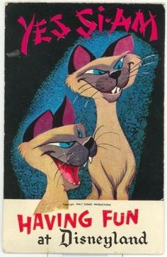 """We are Si-am-eze if you please ... "" Love these creepy cats and the song they sing in ""Lady & the Tramp"""