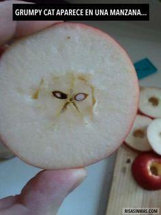 Grumpy cat aparece en una manzana.