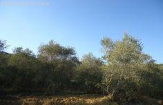 Immobilienangebot - Vetulonia - Villa auf dem Land in der Gemeinde Castiglione della Pescaia