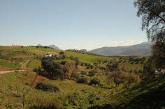 COUNTRY HOUSE NINA y SASCHA // Gemütliches Zimmer inmitten wunderschöner Landschaft - veganes Frühstück optional // Algodonales, Andalucía, Spanien // ★ https://www.airbnb.de/rooms/5378527