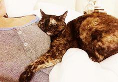 Lea Michele's cat, Sheila! She's sooo cute!
