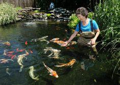 The Richards' Family Backyard Koi Pond - Photo Gallery - masslive.com