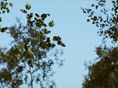 ArtStation - UE4 Forest, Eoin O'Broin