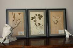1940's Vintage Swedish Custom Framed Pressed Botanicals