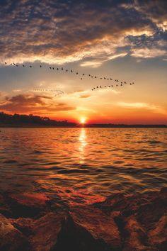 Omg! Canadian geese arriving in August sunrise - eastern Kansas, USA