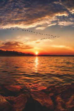 Omg! Canadian geese arriving in August sunrise - eastern Kansas, USA