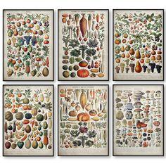 Home Art Gift Canvas Print Vintage Antique Stlye Poster Vegetable Fruit Mushroom Room Wall Decor Design Gifts No Frame Free Ship Worldwide Wall Decor Design, Wall Art Decor, Room Decor, Canvas Art Prints, Canvas Wall Art, Canvas Poster, Painting Prints, Types Of Art Styles, Nordic Art