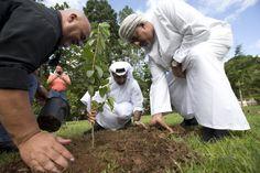 [Vídeo] El Jeque Verde planta un árbol en Adjuntas -...