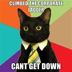 Business Cat - corporate ladder