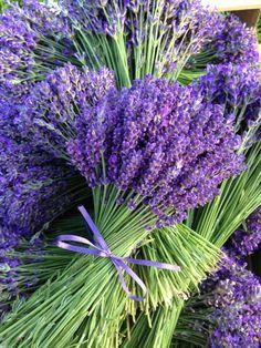 Kytice levandule Bouquet of lavender Lavender Cottage, Lavender Fields, Lavender Color, Lavender Flowers, Purple Flowers, Beautiful Flowers, Lavander, French Lavender, Purple Love