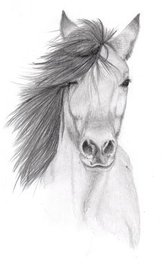 Pencil Sketches of Animals | horse pencil sketch by vulpes corsac traditional…